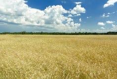 Σύννεφα σωρειτών στον πλούσιο μπλε ουρανό - υψηλό επάνω πέρα από τον τομέα στοκ εικόνες με δικαίωμα ελεύθερης χρήσης