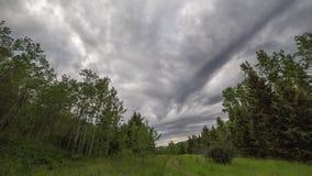 Σύννεφα Timelapse θύελλας στο δάσος φιλμ μικρού μήκους