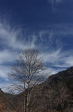 Σύννεφο που εκπέμπει τα δέντρα Στοκ Εικόνες
