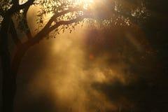 Σύννεφο της σκόνης κάτω από την ελιά Στοκ φωτογραφία με δικαίωμα ελεύθερης χρήσης