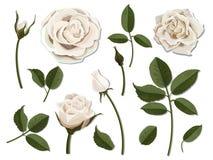 Σύνολο άσπρων ροδαλών μερών λουλουδιών Στοκ Εικόνες