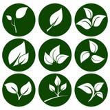 Σύνολο άσπρων φύλλων σε ένα στρογγυλό πράσινο κουμπί Στοιχεία για το eco και τα βιο λογότυπα, εμβλήματα ελεύθερη απεικόνιση δικαιώματος