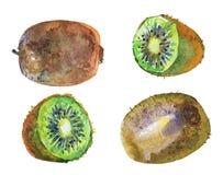 Σύνολο ακτινίδιων Watercolor στοκ εικόνες