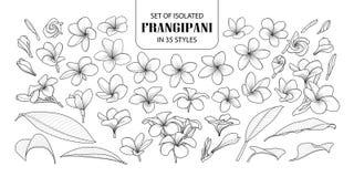 Σύνολο απομονωμένου frangipani σε 35 μορφές ελεύθερη απεικόνιση δικαιώματος
