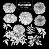 Σύνολο απομονωμένο άσπρο marigold σκιαγραφιών σε 6 μορφές Χαριτωμένη συρμένη χέρι διανυσματική απεικόνιση λουλουδιών στο άσπρο αε Στοκ Εικόνες