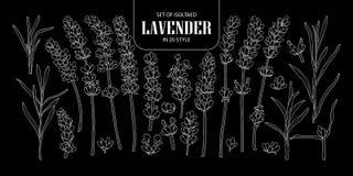Σύνολο απομονωμένο Lavender σε 20 μορφές Χαριτωμένο συρμένο χέρι λουλούδι VE Στοκ Εικόνες