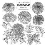 Σύνολο απομονωμένο marigold σε 6 μορφές Χαριτωμένη συρμένη χέρι διανυσματική απεικόνιση στη μαύρη περίληψη και το άσπρο αεροπλάνο Στοκ εικόνα με δικαίωμα ελεύθερης χρήσης