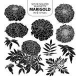Σύνολο απομονωμένο marigold σκιαγραφιών σε 6 μορφές Χαριτωμένη συρμένη χέρι διανυσματική απεικόνιση στην άσπρη περίληψη και το μα Στοκ εικόνες με δικαίωμα ελεύθερης χρήσης