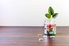 Σύνολο βάζων γυαλιού των νομισμάτων και μια ανάπτυξη εγκαταστάσεων μέσω του στοκ εικόνα