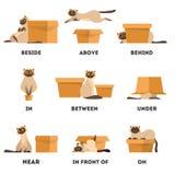 Σύνολο γατών και κιβωτίων Η εκμάθηση τοποθετεί προηγούμενα την έννοια Ζώο ανωτέρω ελεύθερη απεικόνιση δικαιώματος