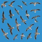 σύνολο γλάρων πουλιών Στοκ εικόνα με δικαίωμα ελεύθερης χρήσης