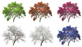 Σύνολο δέντρου τεσσάρων εποχών που απομονώνεται Στοκ εικόνες με δικαίωμα ελεύθερης χρήσης