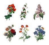 Σύνολο διάφορων λουλουδιών | Παλαιές απεικονίσεις λουλουδιών Στοκ Φωτογραφία