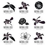 Σύνολο διανυσματικών floral λογότυπων Στοκ Εικόνα