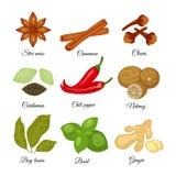 Σύνολο διαφορετικού γλυκάνισου αστεριών καρυκευμάτων, κανέλα, γαρίφαλα, cardamon, διανυσματική απεικόνιση