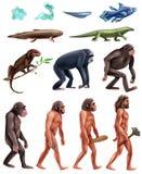Σύνολο εικονιδίων εξέλιξης Δαρβίνου διανυσματική απεικόνιση