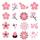 Σύνολο εικονιδίων blossomSakura κερασιών που απομονώνεται στο άσπρο υπόβαθρο Στοκ εικόνα με δικαίωμα ελεύθερης χρήσης