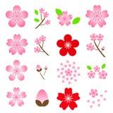 Σύνολο εικονιδίων Sakura ανθών κερασιών που απομονώνεται στο άσπρο υπόβαθρο Στοκ Εικόνα