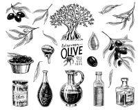 Σύνολο ελαιολάδου και κλάδου των δέντρων Οργανικό χορτοφάγο προϊόν στο μπουκάλι Πράσινες εγκαταστάσεις για την υγιεινή διατροφή Μ Στοκ φωτογραφία με δικαίωμα ελεύθερης χρήσης