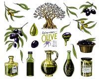 Σύνολο ελαιολάδου και κλάδου των δέντρων Οργανικό χορτοφάγο προϊόν στο μπουκάλι Πράσινες εγκαταστάσεις για την υγιεινή διατροφή Μ Στοκ εικόνες με δικαίωμα ελεύθερης χρήσης