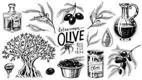 Σύνολο ελαιολάδου και κλάδου των δέντρων Οργανικό χορτοφάγο προϊόν στο μπουκάλι Πράσινες εγκαταστάσεις για την υγιεινή διατροφή Μ Στοκ Εικόνες
