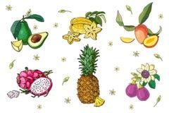 Σύνολο εξωτικών φρούτων Αβοκάντο, carambola, μάγκο, pitahaya, ανανάς, λωτός Απομονωμένη εικόνα στο λευκό ελεύθερη απεικόνιση δικαιώματος