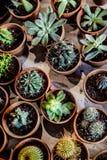 Σύνολο εσωτερικών succulent εγκαταστάσεων σπιτιών και διάφορου κάκτου στο diff στοκ εικόνες