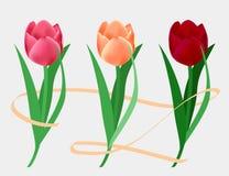 Σύνολο ζωηρόχρωμων τουλιπών Λουλούδια για το φυσικό σχέδιο Στοκ Φωτογραφίες