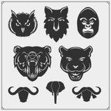 Σύνολο ζωικών σκιαγραφιών Σαβάνα, δάσος, ζώα ζουγκλών Πρότυπο σχεδίου για τα εμβλήματα, τις αυτοκόλλητες ετικέττες και τα λογότυπ στοκ φωτογραφίες