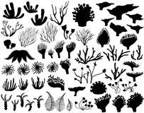 Σύνολο θαλασσίων σκιαγραφιών ζωής ελεύθερη απεικόνιση δικαιώματος