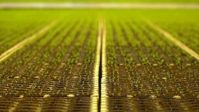 Σύνολο θερμοκηπίων των μικρών μικρών νεαρών βλαστών, καλλιέργεια απόθεμα βίντεο