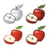 Σύνολο και μισό της Apple με το φύλλο Εκλεκτής ποιότητας χάραξη χρώματος και επίπεδος απεικόνιση αποθεμάτων