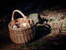 Σύνολο καλαθιών του φρέσκου δάσους mashrooms με το φως πρωινού Στοκ φωτογραφία με δικαίωμα ελεύθερης χρήσης