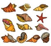 Σύνολο κοχυλιών θάλασσας διανυσματική απεικόνιση