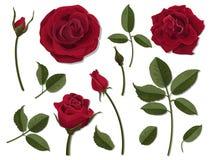 Σύνολο κόκκινων ροδαλών μερών λουλουδιών Στοκ φωτογραφία με δικαίωμα ελεύθερης χρήσης