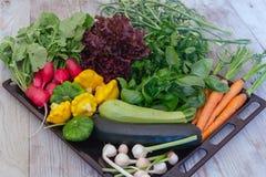 Σύνολο λαχανικών αρχών του καλοκαιριού στοκ φωτογραφίες με δικαίωμα ελεύθερης χρήσης