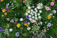 Σύνολο λιβαδιών ποικίλων ζωηρόχρωμων άγριων λουλουδιών συμπεριλαμβανομένων των μπλε cornflowers και των κίτρινων νεραγκουλών, Αγγ Στοκ Φωτογραφία