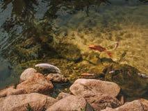 Σύνολο λιμνών των ψαριών Στοκ φωτογραφία με δικαίωμα ελεύθερης χρήσης