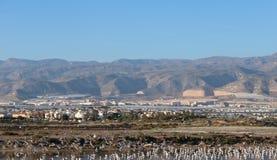 Σύνολο λιμνών seagulls στοκ φωτογραφία με δικαίωμα ελεύθερης χρήσης