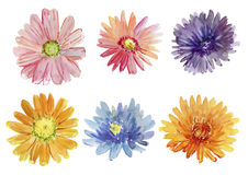 Σύνολο λουλουδιών φθινοπώρου η διακοσμητική εικόνα απεικόνισης πετάγματος ραμφών το κομμάτι εγγράφου της καταπίνει το watercolor  Στοκ Εικόνα
