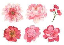 Σύνολο λουλουδιών, φύλλων και στοιχείων κλάδων Στοκ φωτογραφία με δικαίωμα ελεύθερης χρήσης