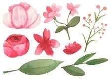Σύνολο λουλουδιών, φύλλων και στοιχείων κλάδων Στοκ φωτογραφίες με δικαίωμα ελεύθερης χρήσης