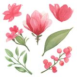Σύνολο λουλουδιών, φύλλων και στοιχείων κλάδων Στοκ Φωτογραφίες