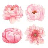 Σύνολο λουλουδιών, φύλλων και στοιχείων κλάδων Στοκ Φωτογραφία