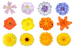 Σύνολο λουλουδιών Στοκ Εικόνα