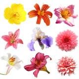 Σύνολο λουλουδιών στοκ φωτογραφίες