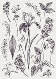 Σύνολο με τα λουλούδια άνοιξη στοκ φωτογραφία με δικαίωμα ελεύθερης χρήσης