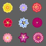 Σύνολο με τα φωτεινά λουλούδια στο διάνυσμα Στοκ φωτογραφία με δικαίωμα ελεύθερης χρήσης