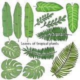Σύνολο με τα φύλλα των τροπικών φυτών Ζωηρόχρωμη διανυσματική απεικόνιση στο ύφος σκίτσων Στοκ εικόνες με δικαίωμα ελεύθερης χρήσης