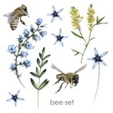 Σύνολο με τις μέλισσες και τα wildflowers η ανασκόπηση απομόνωσε το λευκό στοκ εικόνες